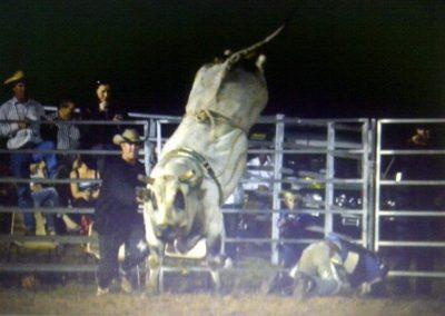 "BAA PBR Bucking Bull ""Arnie"""