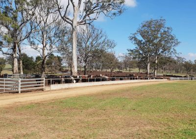 Beef Feedlot - New South Wales, Australia