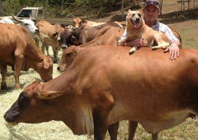 Kai Blair with his cattle - Mossman, FNQ, Australia