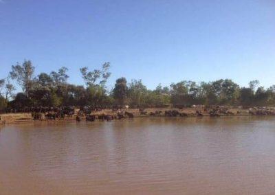 Brookston Wagyu - North Queensland