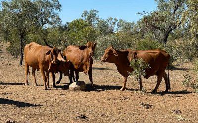 Blair Agri Advisors is in Toodyay, Western Australia.