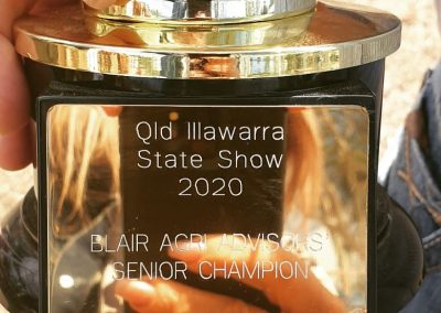 BAA SPONSORSED - QLD ILLAWARRA STATE SHOW 2020 - GATTON - SEQ