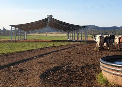 SABAREE DAIRY - LOAFING SHED - SEQ